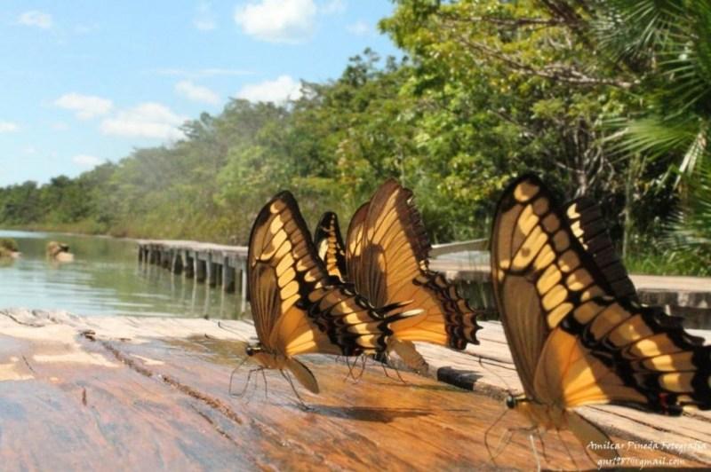 Fauna en Laguna Lachuá Cobán Alta Verapaz foto por Amilcar Pineda 1024x682 - Guía Turística  - Lachuá, Reserva Natural y Área Protegida