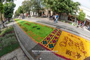 La alfombra más larga del mundo