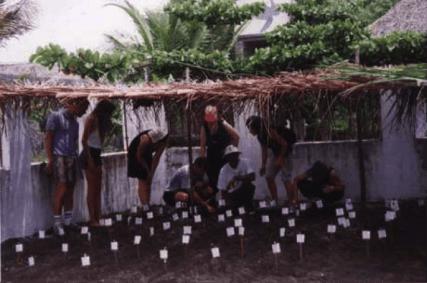 liberacion de tortugas2 - Guía Turística - Liberación de Tortugas