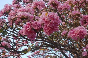 matilisguate 300x199 - Entre flora y aroma a Cuaresma