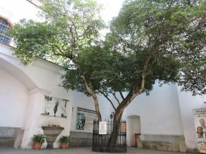 DSCN0693 300x225 - Hermano Pedro - su historia, museo y sitio arqueológico