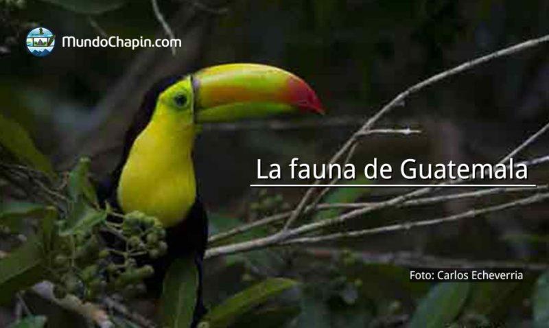 La fauna de Guatemala