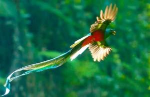 El Quetzal foto por Thor Janson 300x193 - Resumen del libro La Mansión Del Pájaro Serpiente por Virgilio Rodríguez Macal