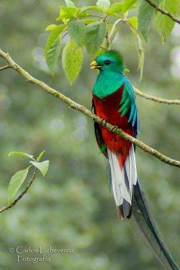 El Refugio del Quetzal ubicado en San Rafael Pie de la Cuesta departamento de San Marcos foto por Carlos Echeverria - Fotos de Guatemala por Carlos Echeverría