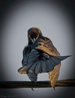 ave en la cuidad de guatemala foto por hugo altan - Galeria de Fotos de Guatemala por Hugo Altán