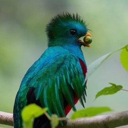 El Quetzal - 5 foto por Luis Búrbano