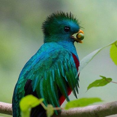 el quetzal 5 foto por luis burbano - Galeria de Fotos de Guatemala por Luis Búrbano