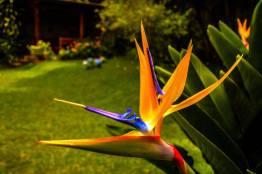 Flor, Ave del Paraíso - foto por Esau Beltran Marcos