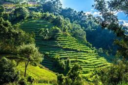 terraseado agricola en solola guatemala foto por esau beltran marcos - Galeria de Fotos de Guatemala por Esaú Beltrán Marcos