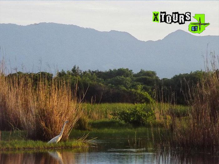 7540b6db db39 4865 a3a9 11fe7f85c43d - Tour: Restauración de manglar en Monterrico