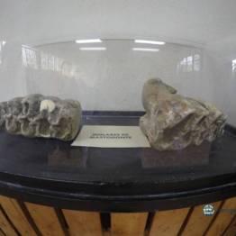 Molares de mastodonte