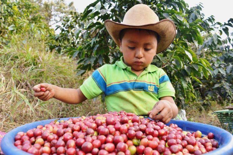 guatemala tierra del cafe foto por samuel camey - 9 cosas por las que Guatemala es conocida
