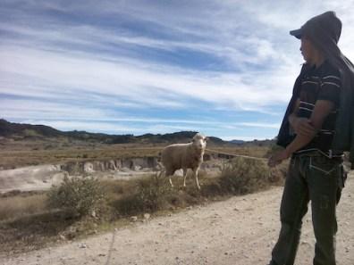 pastores cuidando grandes reban cc 83os de ovejas en cuchumatanes - Guía Turística -  Sendero Ecológico La Maceta