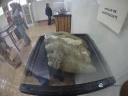 """podemos comparar el taman cc 83o del molar con el de las personas - Guía Turística - Sitio Paleontológico """"El Mamut"""""""