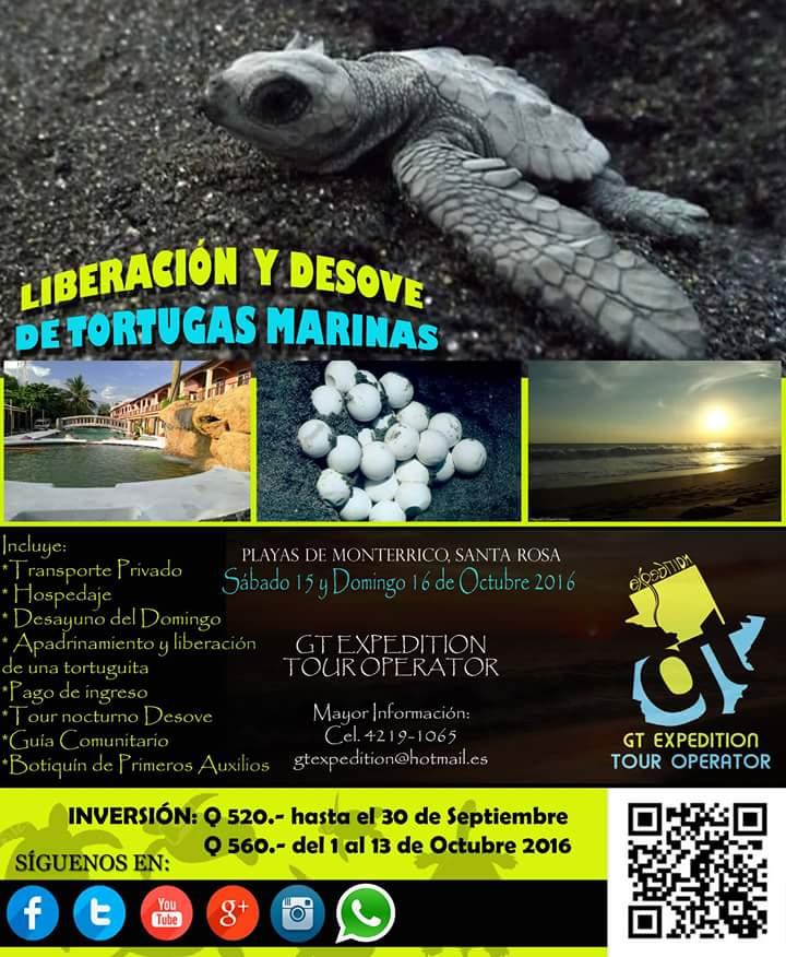 14248974 315547038795502 2084469924 n - Evento - Liberación y desove de tortugas marinas