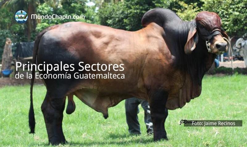 Principales sectores de la economía guatemalteca
