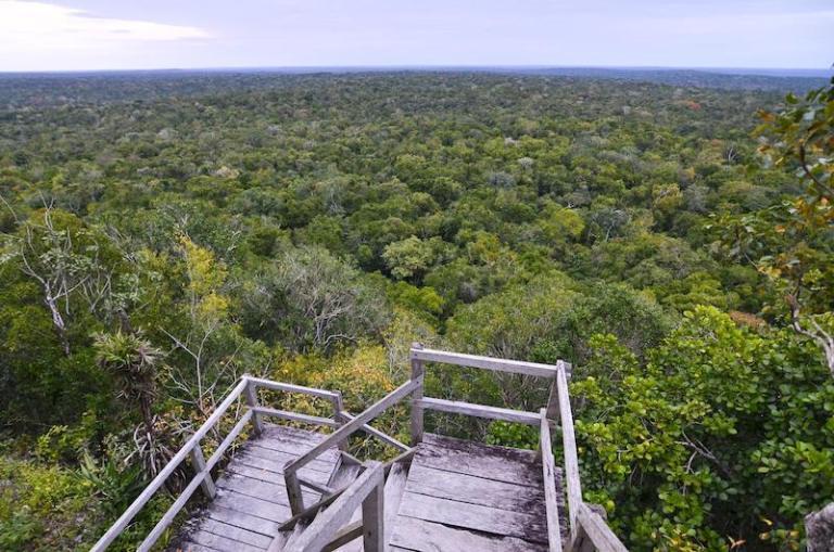 vista desde la danta el mirador peten foto por rony rodriguez 768x509 - Tipos de Vegetación de Guatemala