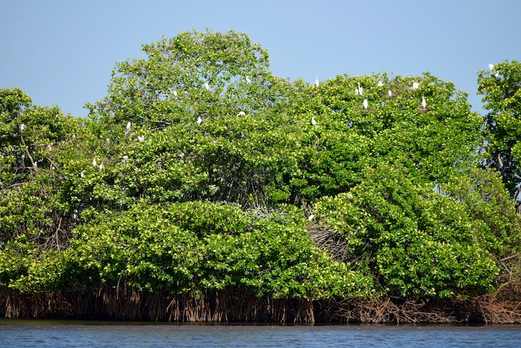 undp gt ambiente giramangle - 7 Tipos de Bosques de Guatemala