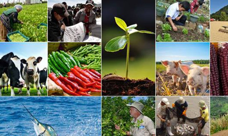 Ministerio de agricultura ganader a y alimentaci n solo for Ministerio de ganaderia