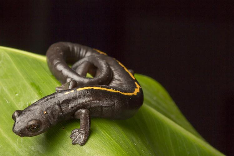 53a0378 - Animales que sólo han existido en Guatemala