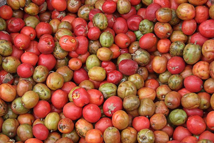 migenacol jocote - 10 Frutos nativos de Guatemala