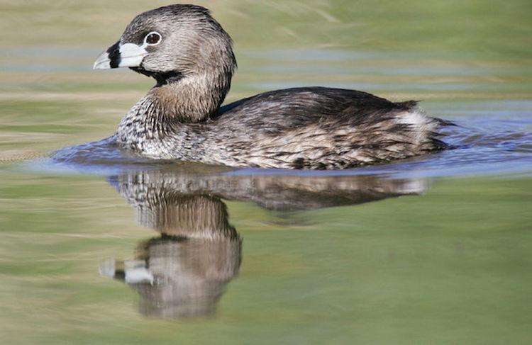 patopoc - Animales que sólo han existido en Guatemala