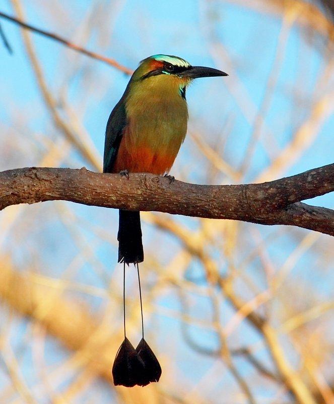 110153527 su7jp7qm - 10 Tipos de Aves en Guatemala