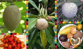 Frutas exóticas de Guatemala
