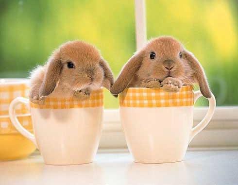 imagen de conejitos adorables, foto de conejos enanos bebes