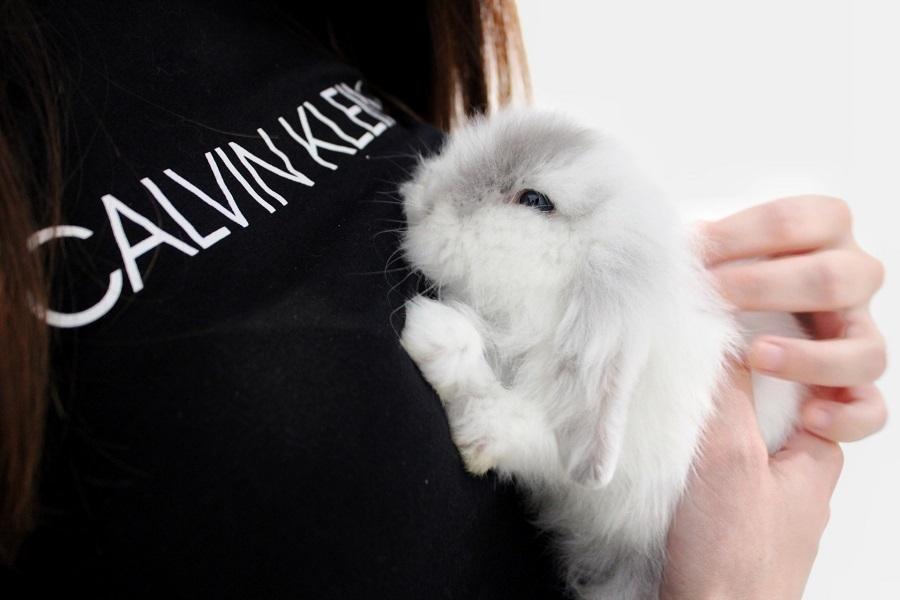 como nacen los conejos recién nacidos