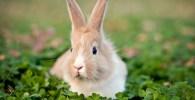 mitos y tópicos sobre los conejos