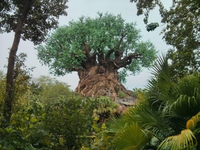 Árvore da vida animal kingdom
