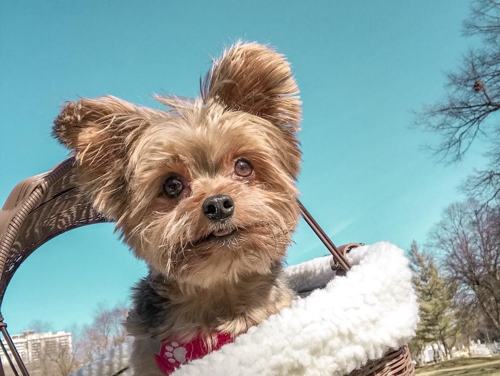 Custos de um cachorro em Toronto – Mundo da Sil 95aebf3b558
