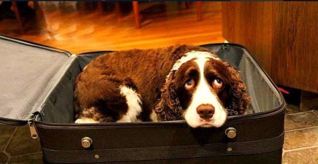 Marido esconde cadela na mala para que ela veja sua Esposa pela última vez.