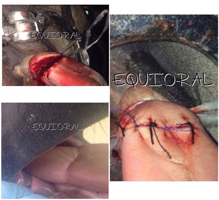 suturar la legua es el siguiente paso