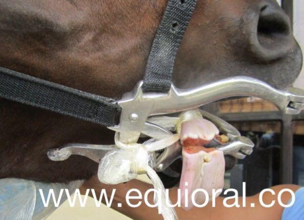 torniquete eficaz cuando se aplica en posición caudal a la herida