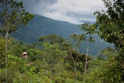 Guatemala Calling