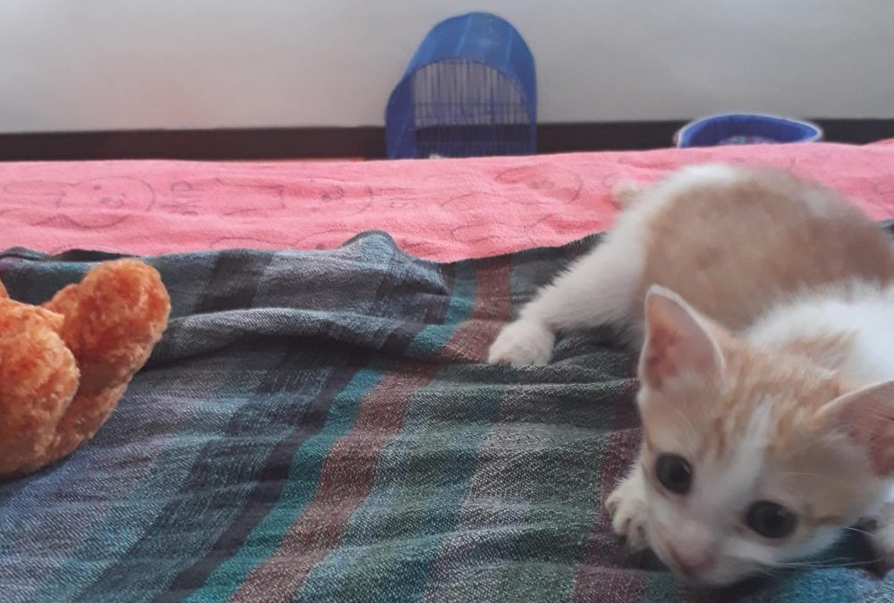 Mundo Exchange Thailand: The Unintentional Rescue Home for Abandoned Kittens