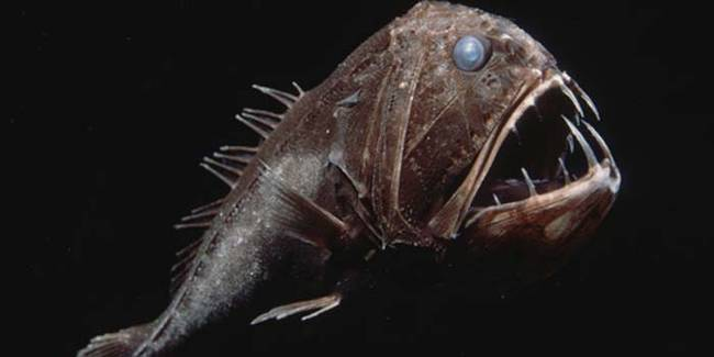 Top 10 Most Dangerous Fish: Fangtooth