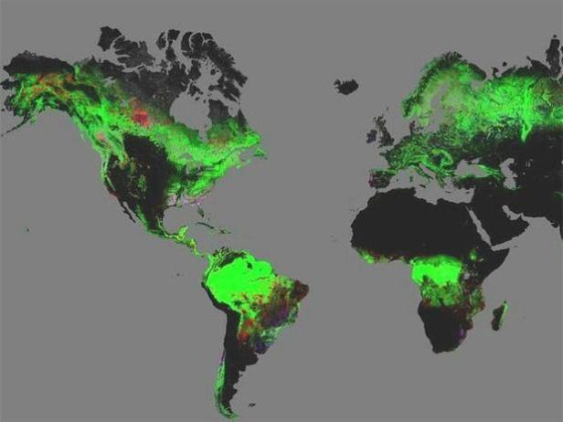 Mapa interactivo de la deforestación global Disponible un mapa interactivo de la deforestación global