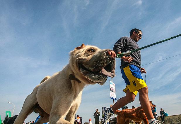 Resultado de imagen para running con perros