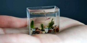 Artista cria o menor aquario do mundo
