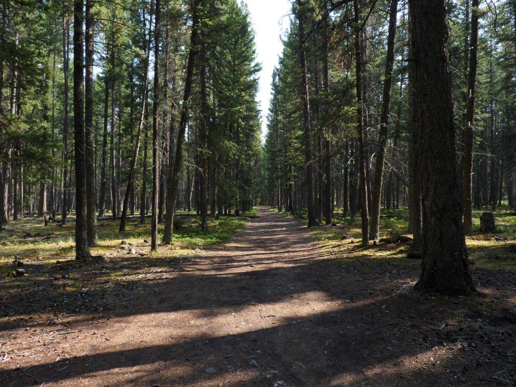 Hoodoos Trail 01 Banff Canadá