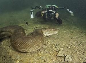 Mergulhador Encontra a Maior Cobra do Brasil