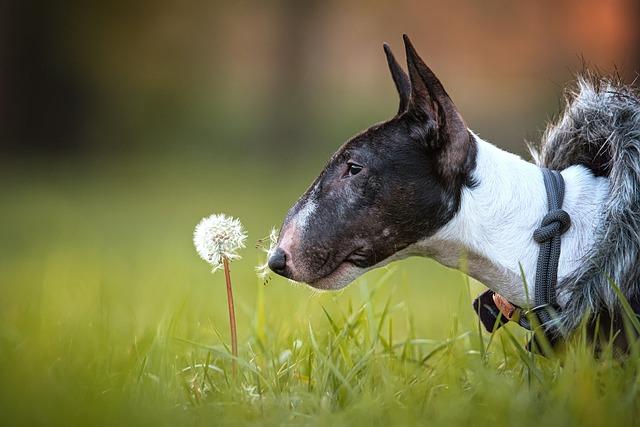 Características gerais do Bull Terrier