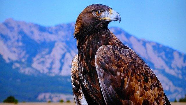 Características das águias: alguns hábitos principais
