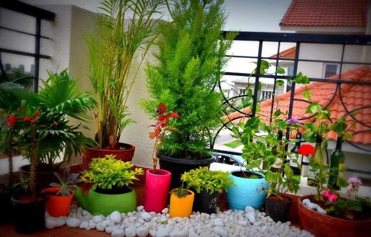47+ Plantas para balcones soleados y ventosos inspirations