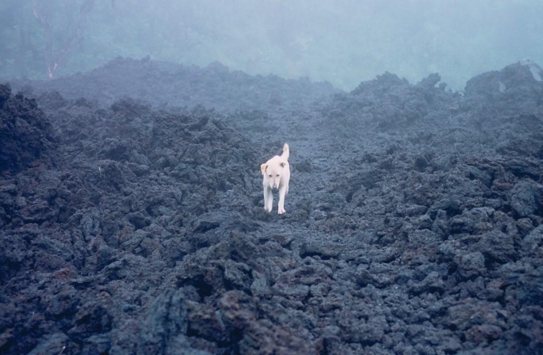 Perro en el volcán - Canon EOS500N
