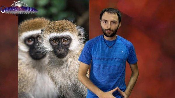 China incorpora genes HUMANOS en el cerebro de monos, volviéndolos MUY INTELIGENTES