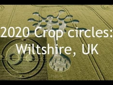 2 nuevos círculos de cultivos encontrados en Wiltshire, Reino Unido – mayo de 2020